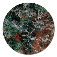 Aerial Photography Of Green Leafed Tree Magnet 5  (round)