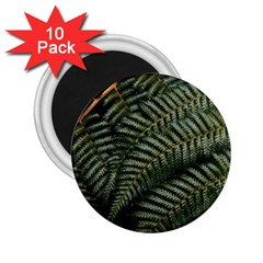 Green Leaves Photo 2 25  Magnets (10 Pack)