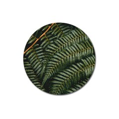 Green Leaves Photo Magnet 3  (round)