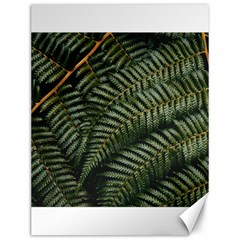 Green Leaves Photo Canvas 12  X 16