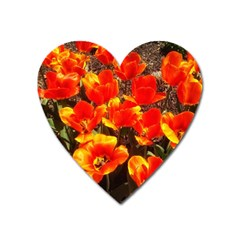 Orange Tulips At The Commons Heart Magnet by Riverwoman