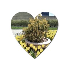 Columbus Commons Yellow Tulips Heart Magnet by Riverwoman