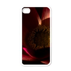 Zappwaits Water Lily Iphone 4 Case (white)