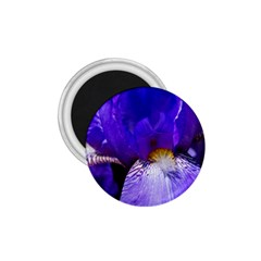 Zappwaits Flower 1.75  Magnets
