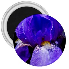 Zappwaits Flower 3  Magnets