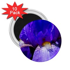 Zappwaits Flower 2.25  Magnets (10 pack)