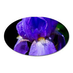 Zappwaits Flower Oval Magnet