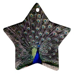 Peacock Bird Feather Plumage Green Ornament (star)