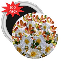 Flowers Roses Leaves Autumn 3  Magnets (100 Pack)