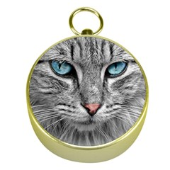 Cat Animal Cat Portrait Mackerel Gold Compasses