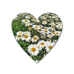 Columbus Commons Shasta Daisies Heart Magnet by Riverwoman