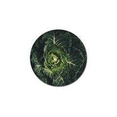 Plant Leaf Flower Green Produce Vegetable Botany Flora Cabbage Macro Photography Flowering Plant Golf Ball Marker (10 Pack) by Vaneshart