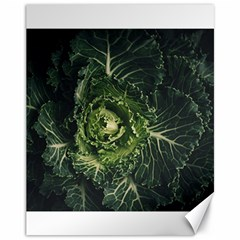 Plant Leaf Flower Green Produce Vegetable Botany Flora Cabbage Macro Photography Flowering Plant Canvas 11  X 14