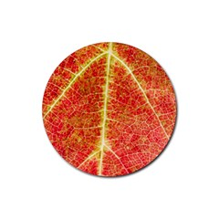 Plant Vineyard Wine Sunlight Texture Leaf Pattern Green Red Color Macro Autumn Circle Vein Sunny  Rubber Coaster (round)