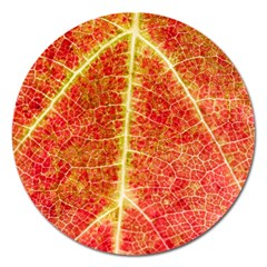 Plant Vineyard Wine Sunlight Texture Leaf Pattern Green Red Color Macro Autumn Circle Vein Sunny  Magnet 5  (round)