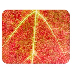 Plant Vineyard Wine Sunlight Texture Leaf Pattern Green Red Color Macro Autumn Circle Vein Sunny  Double Sided Flano Blanket (medium)