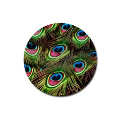 Peacock Feathers Color Plumage Magnet 3  (round)