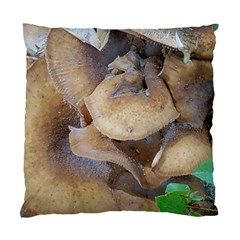 Close Up Mushroom Abstract Standard Cushion Case (one Side) by Fractalsandkaleidoscopes