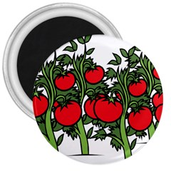 Tomato Garden Vine Plants Red 3  Magnets