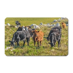 Cows At Countryside, Maldonado Department, Uruguay Magnet (rectangular) by dflcprints