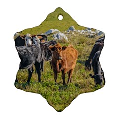 Cows At Countryside, Maldonado Department, Uruguay Snowflake Ornament (two Sides) by dflcprints