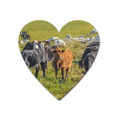 Cows At Countryside, Maldonado Department, Uruguay Heart Magnet by dflcprints