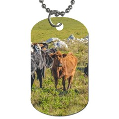 Cows At Countryside, Maldonado Department, Uruguay Dog Tag (one Side) by dflcprints