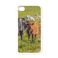 Cows At Countryside, Maldonado Department, Uruguay Iphone 4 Case (white) by dflcprints