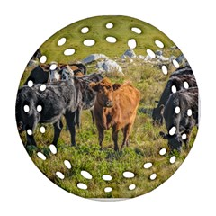 Cows At Countryside, Maldonado Department, Uruguay Round Filigree Ornament (two Sides) by dflcprints