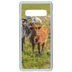 Cows At Countryside, Maldonado Department, Uruguay Samsung Galaxy S10 Seamless Case(white) by dflcprints