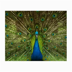 Peacock Feathers Bird Nature Small Glasses Cloth