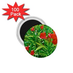 Red Flowers And Green Plants At Outdoor Garden 1 75  Magnets (100 Pack)  by dflcprintsclothing