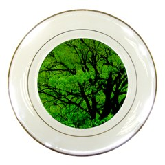 Big Trees, El Leoncito National Park, San Juan, Argentina Porcelain Plates by dflcprintsclothing