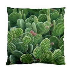 Green Cactus Standard Cushion Case (two Sides) by Sparkle