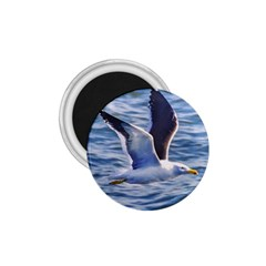 Seagull Flying Over Sea, Montevideo, Uruguay 1 75  Magnets by dflcprintsclothing