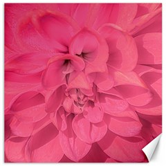 Beauty Pink Rose Detail Photo Canvas 20  X 20