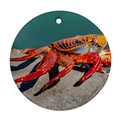 Colored Crab, Galapagos Island, Ecuador Round Ornament (two Sides)
