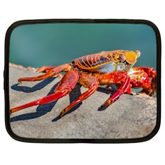 Colored Crab, Galapagos Island, Ecuador Netbook Case (xxl)