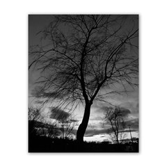 Tree Bw Poster 16  X 20