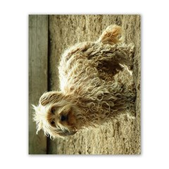 Curly Dog Horizontal Poster 16  X 20