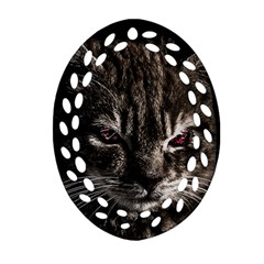 Creepy Kitten Portrait Photo Illustration Oval Filigree Ornament (two Sides)