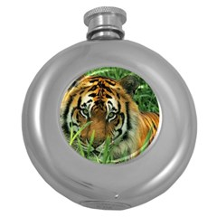 Tiger Hip Flask (5 Oz) by ironman2222