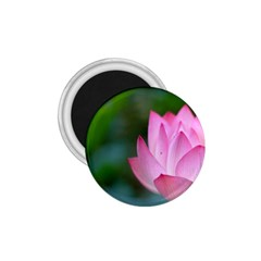 Pink Flowers 1 75  Magnet by ironman2222