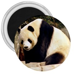 Giant Panda National Zoo 3  Magnet by rainbowberry