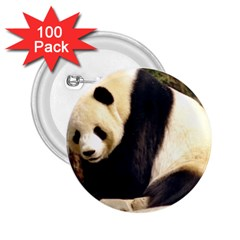 Giant Panda National Zoo 2 25  Button (100 Pack)