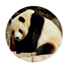 Giant Panda National Zoo Round Ornament (two Sides)