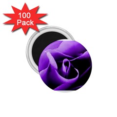 Purple Rose 100 Pack Small Magnet (round)